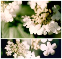 flowers:3 by mymy