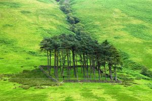 Scotland, Trees park by elodie50a