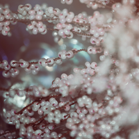 tree pearls by DianaGentili