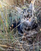 in dry grass by Mari-Ghostly