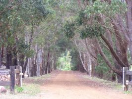 Tree Lined Driveway by stock-kitty