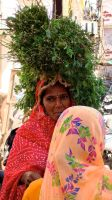 N. India. by jennystokes