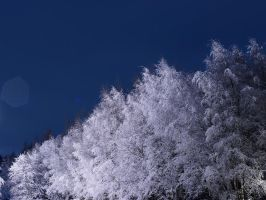 Winter wind on the tree tops by game-flea