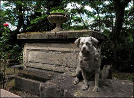 Cemetery of Dogs and Other Domestic Animals - 8 by SUDOR