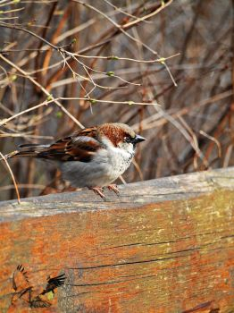 Little Sparrow by MotherBlessing