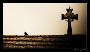 A Pigeon n a Cross by rylphotography