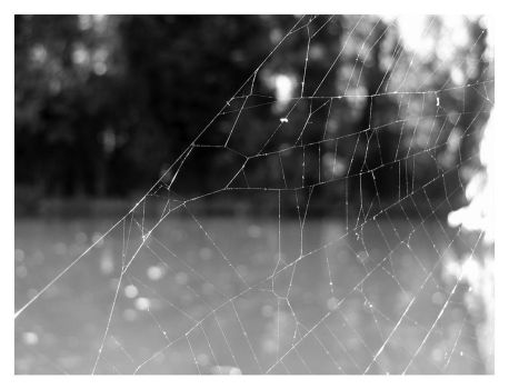 Web 2 by wolf