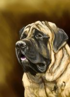 A Mastiff Mug by SilverFlight