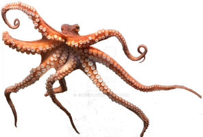 Octopus png by juciely