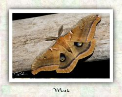 Moth by Merlinstouch