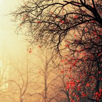 last leaves of the fall by Writto