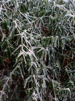 frozen leaves by KTVL-resources