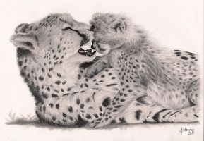 Cheetah with baby by Lakana