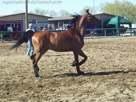 Rancho Murieta 08 - Lunging 03 by Nyaorestock