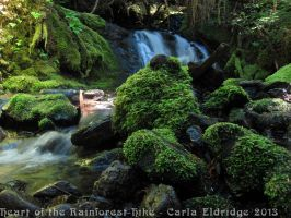 Heart of the Rainforest Hike 2013 18 by Mattsma