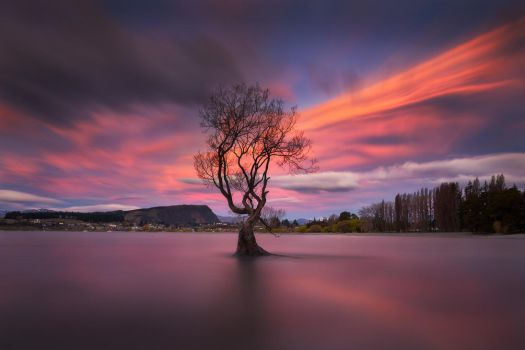 Wicked Wanaka by Dee-T