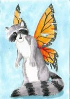 Coon Wings ACEO by Stormslegacy