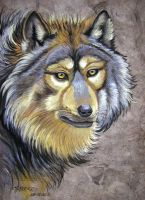 Wolf by HouseofChabrier