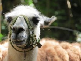 Alpaca my bags... by camelopardalisinblue