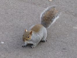 Animals 092 squirrel by Dreamcatcher-stock