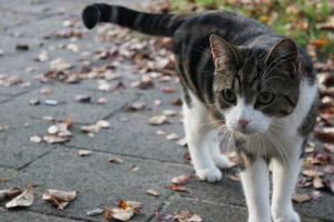 The other cat by ManaGesi
