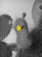 Cactus Flower by webgoddess