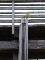 Life Will Find A Way by ohallford