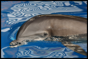 Hotels and Dolphins by loveforRuka