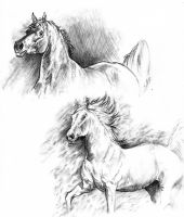 Graphite horses by Elsouille