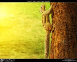 What Is The Meaning Of Life? by ratulupadhyay