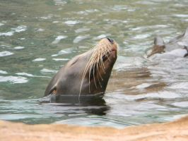 Sea Lion by Burn-Your-Life-Down