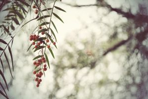 The Red Berries II by MonopolyMismatch