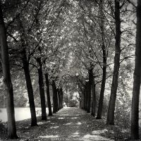 Tree-lined Path by serel