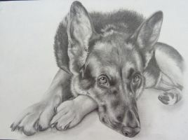 My Dog Billy by JodieLeader