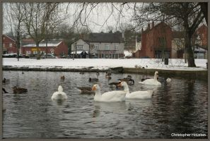 Doncaster ducks by squareprismish