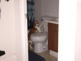 MY CAT NAMED CAT AND MY TOILET by FUTURELISA1