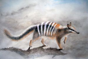 Numbat by Musyupick