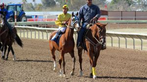Racehorse Stock 35 by Rejects-Stock