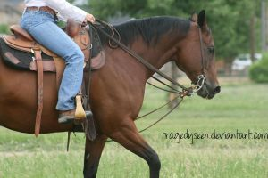 Quarter Horse Stock 78 by tragedyseen
