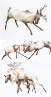 Reindeer concepts for Pinnocha by Russalad
