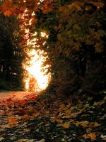 autumn time by KariLiimatainen