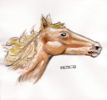 Horse Head Study by Soloboy5