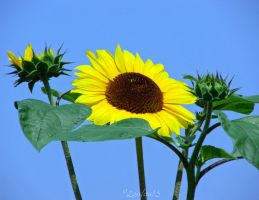 Reach for the Sun by Loulou13