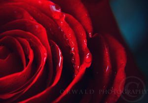 RED by *Orwald