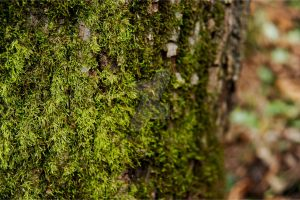 Moss Life by AndersonPhotography