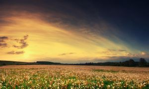 flower field III by iustyn