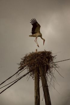 Landing in the nest by luka567