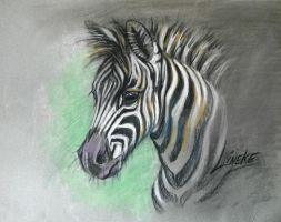 free download for : how to draw a Zebra foal by Linekelijn