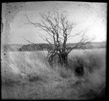 Tree 0336 by filmwaster
