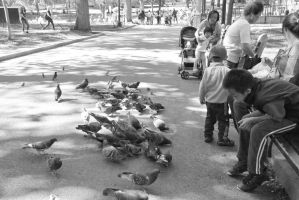 Pigeon Social In the Park 11 by Miss-Tbones